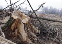 Лебяжье под Казанью превратили в лесоповал